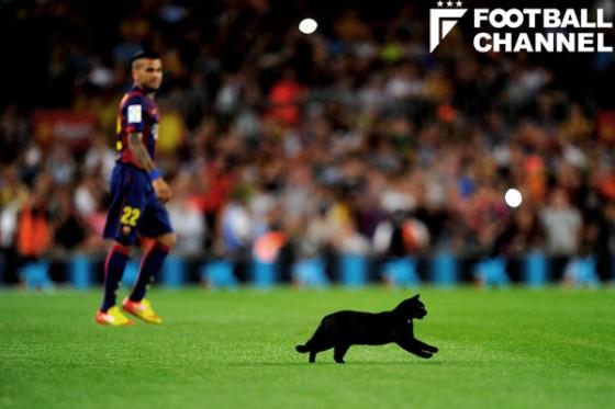 スタジアムに猫が登場