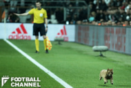 スタジアムに侵入した猫(右下)